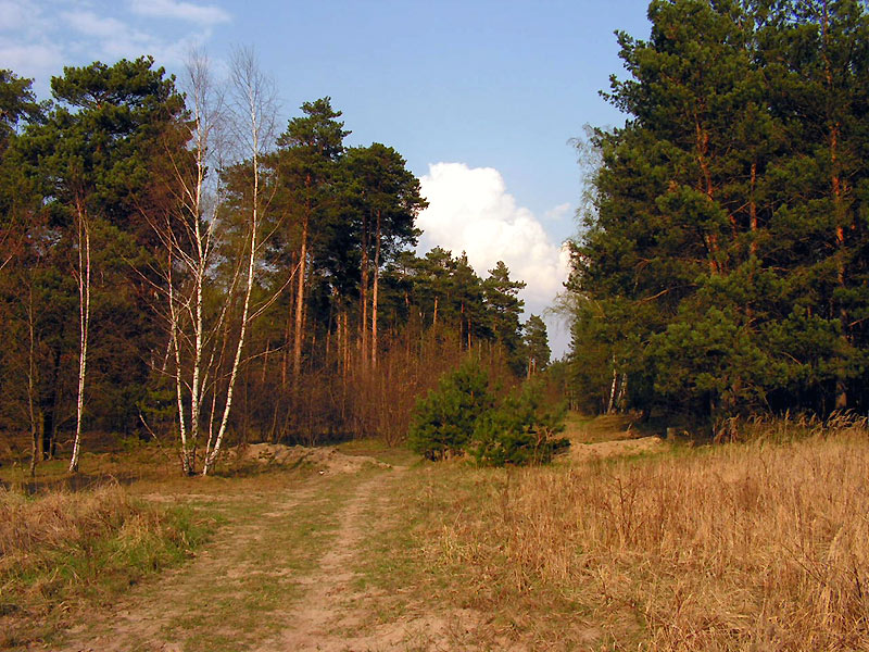 Parforceheide